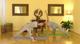 On-line jóga pro začátečníky 7
